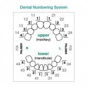 Dental-Numbering-System